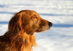 5 lições espirituais que você pode aprender com seu cachorro - 1. O contato físico é bom pra saúde *l* 2. Só existe Aqui e Agora *l* 3. Ter uma vida simples *l* 4. Ninguém é perfeito *l* 5. Brinque a qualquer idade