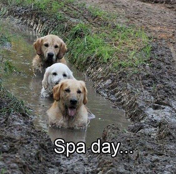 Free LOL Animals photos (11:18:11 AM PST Sunday, February 22, 201) – 8 pics: