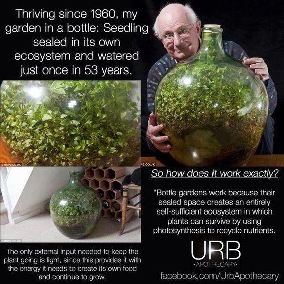 Self Sustaining Eco System Terrarium And Aquarium