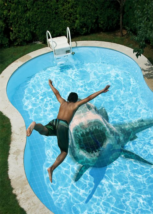 Shark in pool outside the box pinterest swim for Pool design graphic