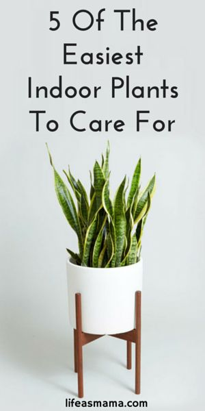 Indoor plants and super easy on pinterest for Easy to keep indoor plants