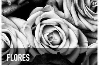 Posters e Quadros Decorativos Flores