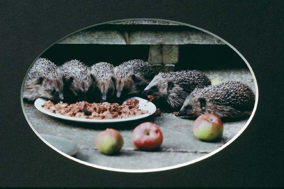 Autumn Juveniles