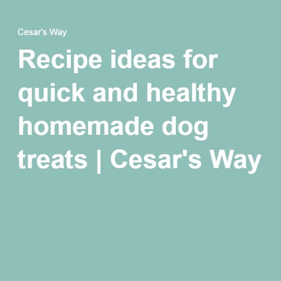 Recipe ideas for quick and healthy homemade dog treats | Cesar's Way