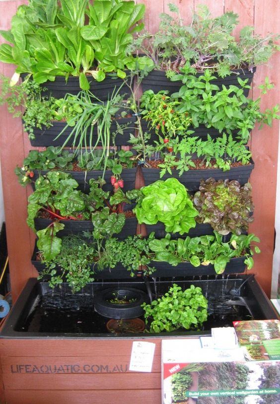 Pinterest the world s catalog of ideas for Hydroponic garden with fish