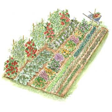 Heritage Vegetable Garden - 10' X 20'.   Tomatoes, beans, cucumbers, spinach, carrots, peas.  Explains how to do French method of mixing seeds to utilize space and for better produce (example: combine spinach and carrot seed).: