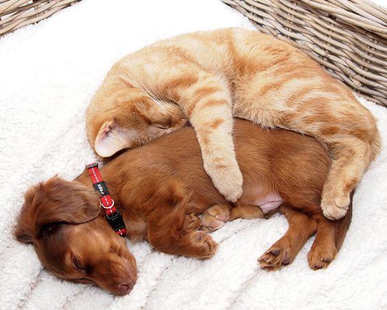 Cães e gatos podem ser amigos? Essas 20 fotos super fofas vão provar que sim!: