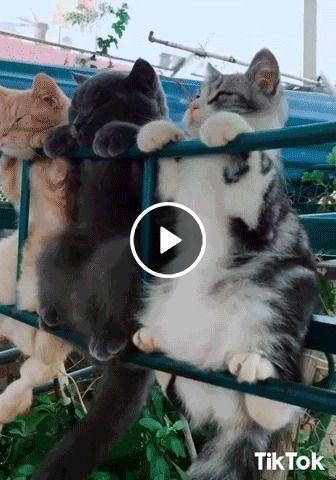 Gatos estendidos no varal