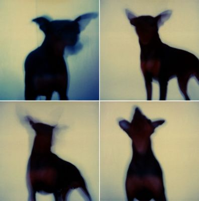 Virginia Macdonald / Dogs 2012