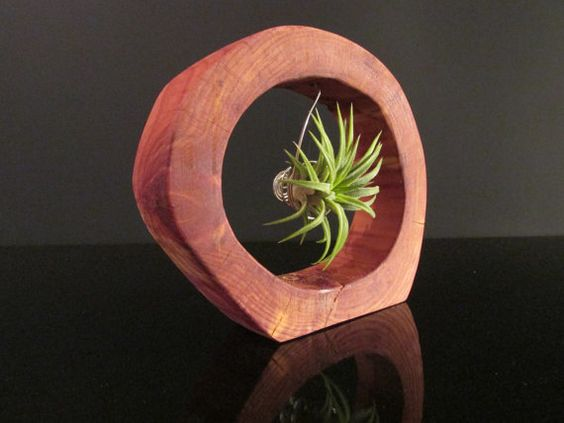Unique Air Plant Holder with Airplant