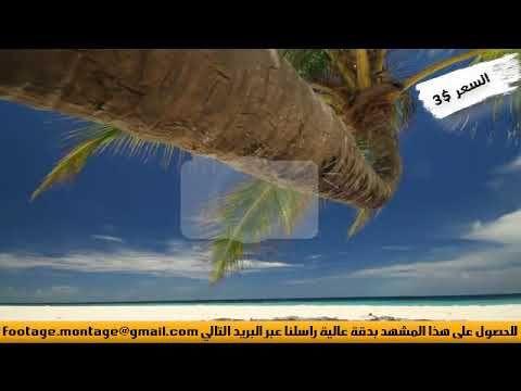 مشهد رائع من تحت نخلة على شاطئ لأعمال المونتاج 705211 Screenshots Pandora Screenshot Ole