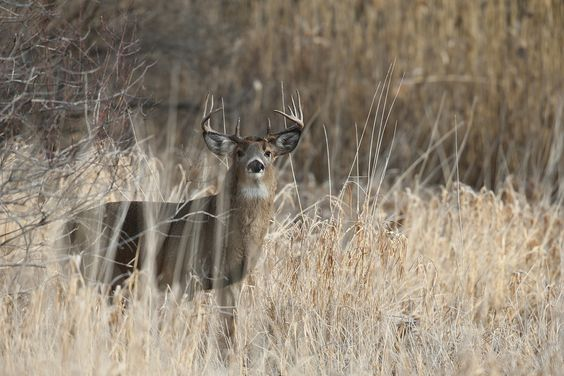 Don't sacrifice field of view when choosing the best riflescope for hunting deer.