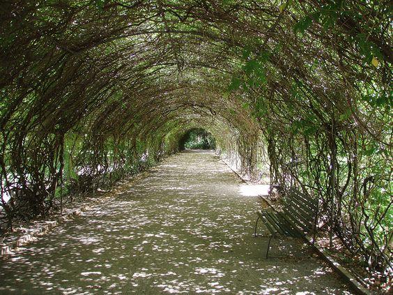 Botanic Gardens in Adelaide, Australia #travel #architecture #nature