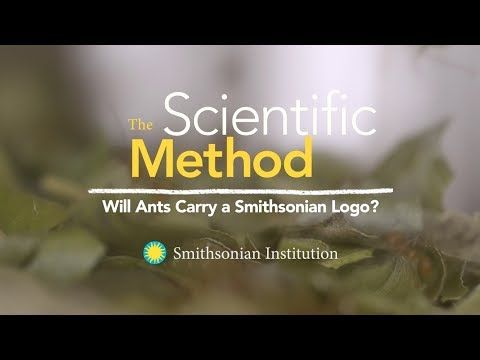 The Scientific Method: Will Ants Carry a Smithsonian Logo? - The scientific method helps us create a structured way to solve problems and answer questions. Watch Dan Babbit, Manager at the Insect Zoo and Live Butterfly Pavilion at Smithsonian's National Museum of Natural History, use the scientific method to test if leaf-cutter ants will carry the Smithsonian logo.