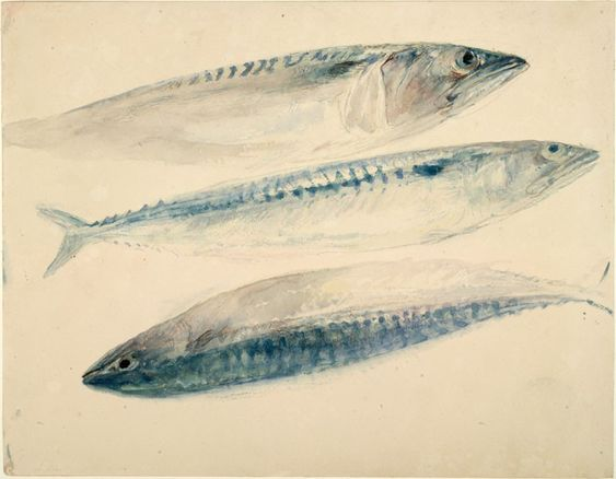 Sketch of Mackerel, Joseph Mallord William Turner, c.1835 - 1840.