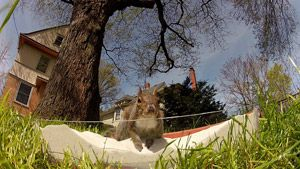 CBC -The Nature of Things with David Suzuki - - Nuts About Squirrels