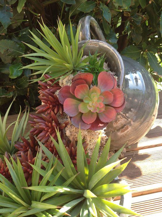 Avalanche de plantes grasses mise en sc ne dans un pichet - Plantes grasses succulentes ...