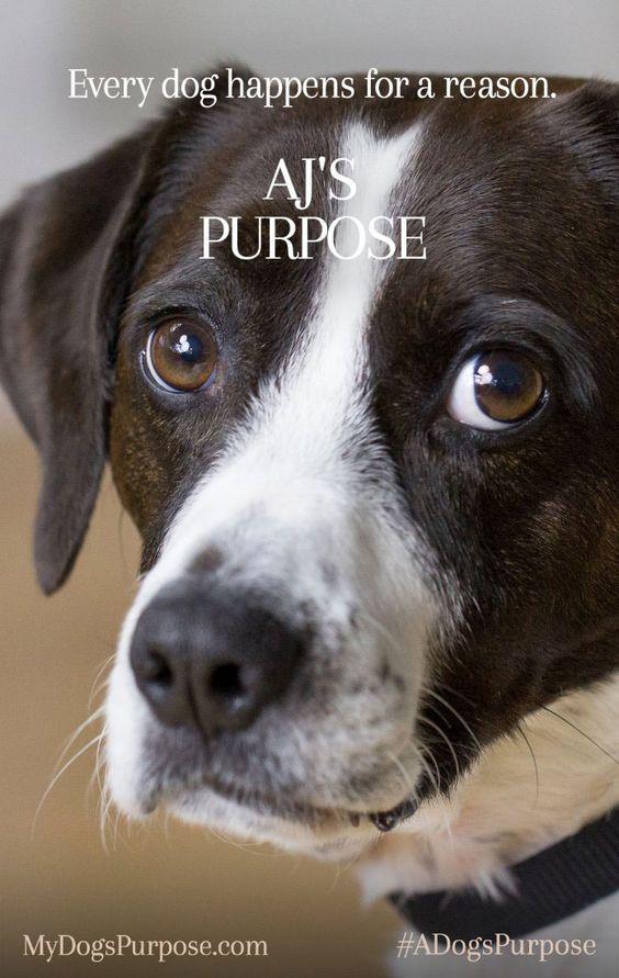 Every Dog Has a Purpose #ADogsPurpose