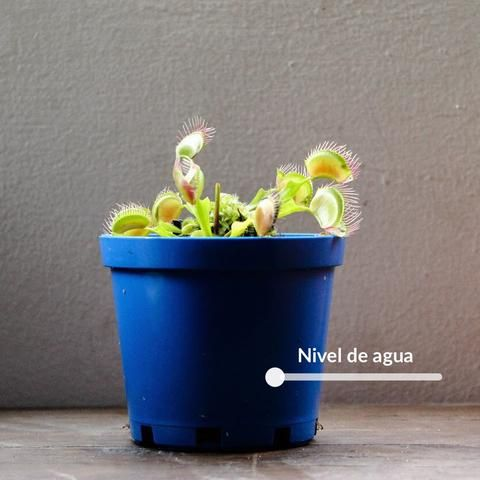 How to Care for Carnivorous Plants