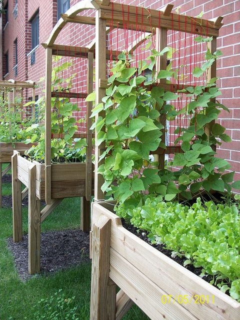 Elevated Garden with Trellis  - big enough for wheelchair to fit through and so pretty with vine plants!