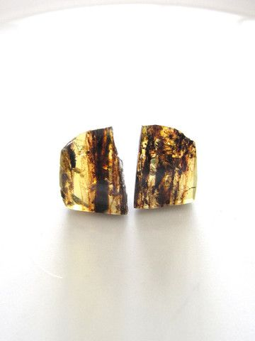 Small studs of amber with unpolished sides displaying the rustic side of the amber. www.chiapasbazaar.com