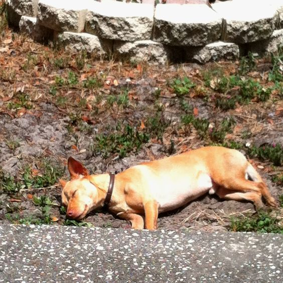 Nothing like a nap in the sun