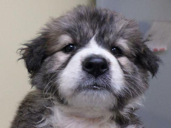 Meet INGRID a Petfinder adoptable Terrier Dog in Florence, SC