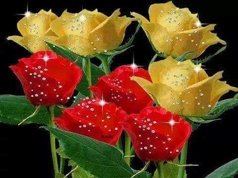 rosas gif: