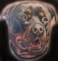 rottweiler tattoo gunnar pets pinterest babies rottweilers and tattoos and body art. Black Bedroom Furniture Sets. Home Design Ideas