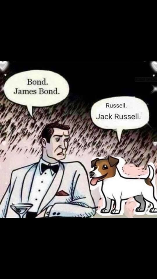 James Bond and Jack Russell