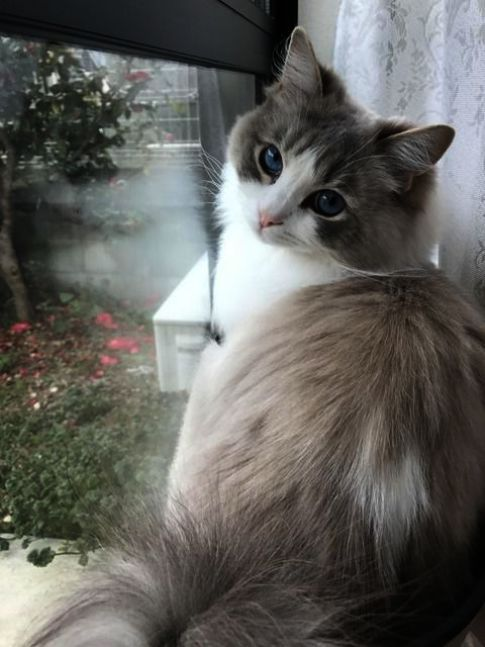 Cats And Kittens For Sale In Ky Order Cute Animals Wallpaper Free Download Beyond Cats And Kittens For Sale Liverpool Once Pretty Cats Beautiful Cats Cute Cats