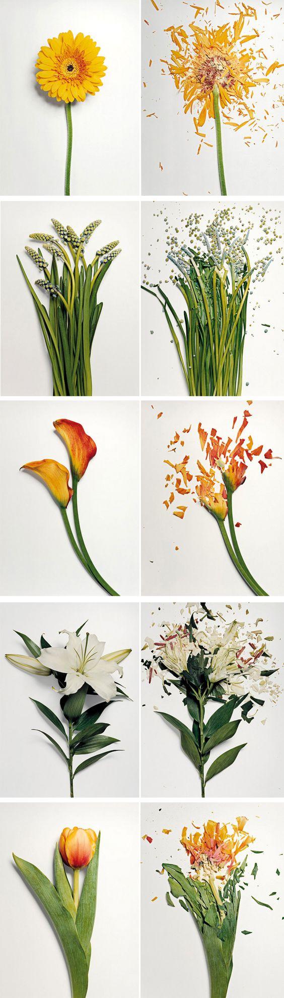 Broken-Flowers-Jon-Shireman-