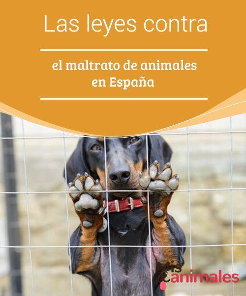 Las Leyes Contra El Maltrato De Animales En España Mis Animales Animales Animal De Compañia El Maltrato