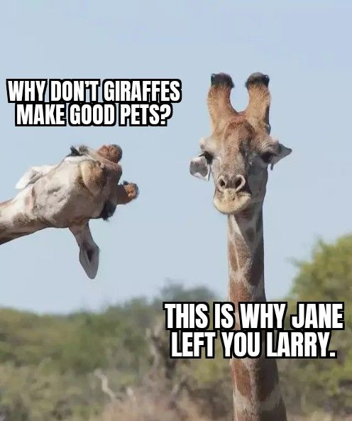 Invest In Giraffe Memes Now Before They Go Sky High Giraffe Memes Sky High