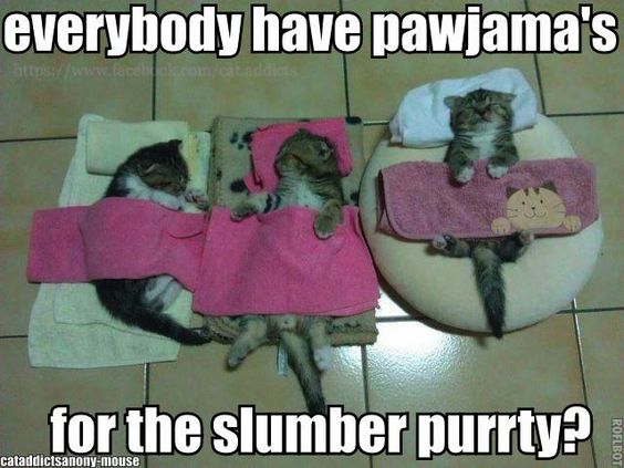 I think they sleep in the mewd