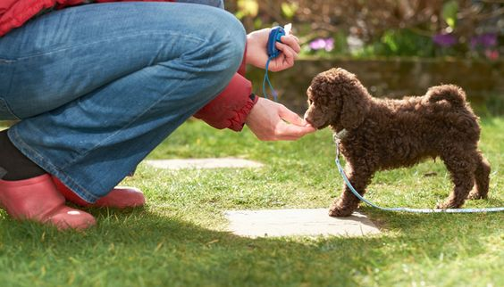 Clicker Training Your Dog - The Basics - When training your dog it's nice to have some tricks up your sleeve. A clicker is one of the most effective ways to