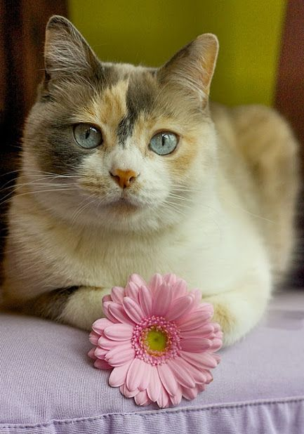 """** That awkward moment when you think you're important to someone and you're not. [""""Dis flower be fakes.""""]:"""