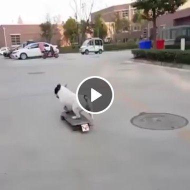 Esse cachorrinho adora andar de skate