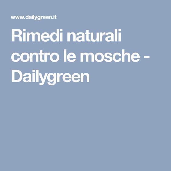 Rimedi naturali contro le mosche - Dailygreen