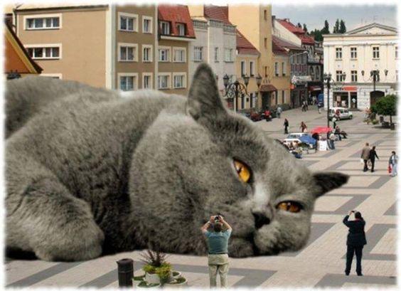 montajes de gatos