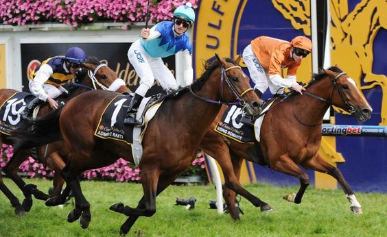 Admire Rakti (JPN) 2008-2014 B.h. (Heart's Cry (JPN)-Admire Teresa (JPN) by Helissio (FR) 1st MRC Caulfield Cup (AUS-G1,2400mT,Caulfield) (photo: Getty Images)