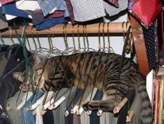 Auf ein paar Hosen. | 25 Katzen, die den perfekten Platz zum Entspannen gefunden haben