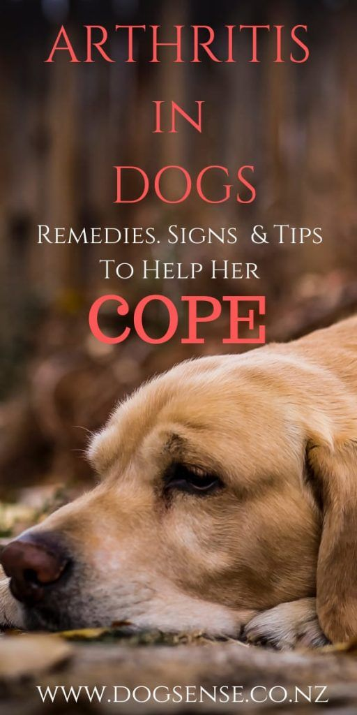 Coping With Arthritis In Dogs Dog Arthritis Remedy Dog Remedies