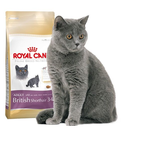 Alimento específico para #gato #British #Shorthair  #Maskokotas #RoyalCanin #gato #cat British-Shorthair-34-Royal-Canin-Maskokotas