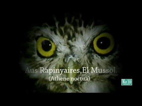 El Mussol (La Llosa de Ranes) - YouTube