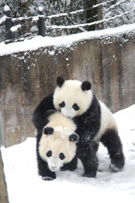 Snow-Fun <3