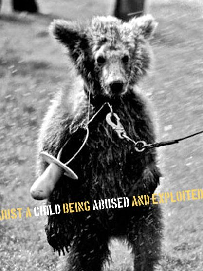 Sad Animal Abuse Pictures | www.imgkid.com - The Image Kid ...