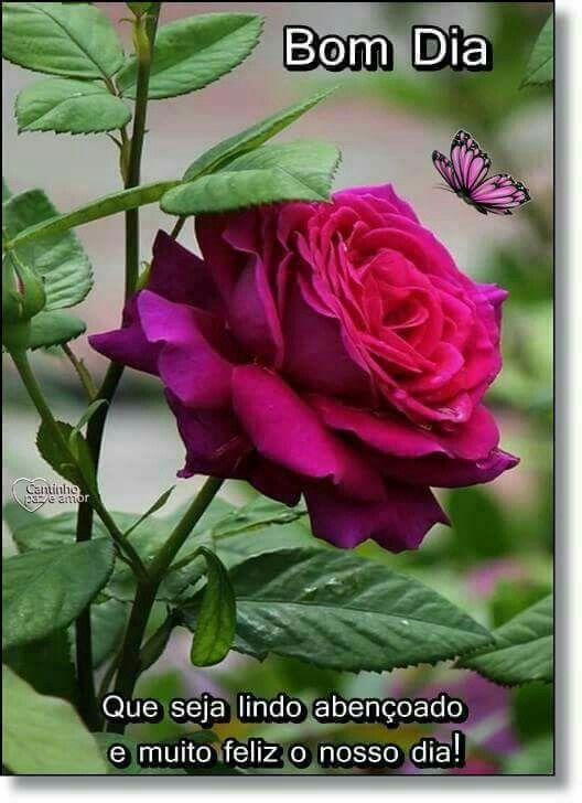 Pin De Juana Perez Em Rosas Com Imagens Flores Bonitas Rosa
