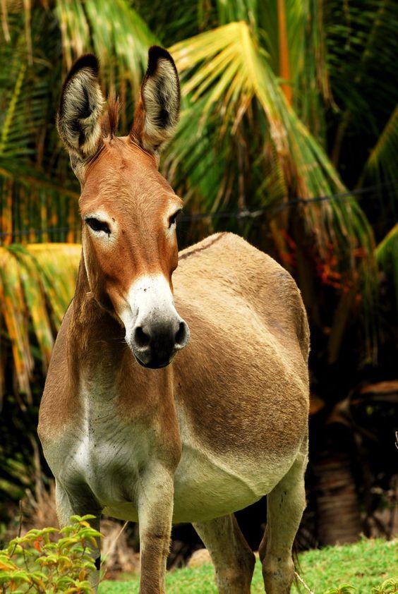 Donkey: