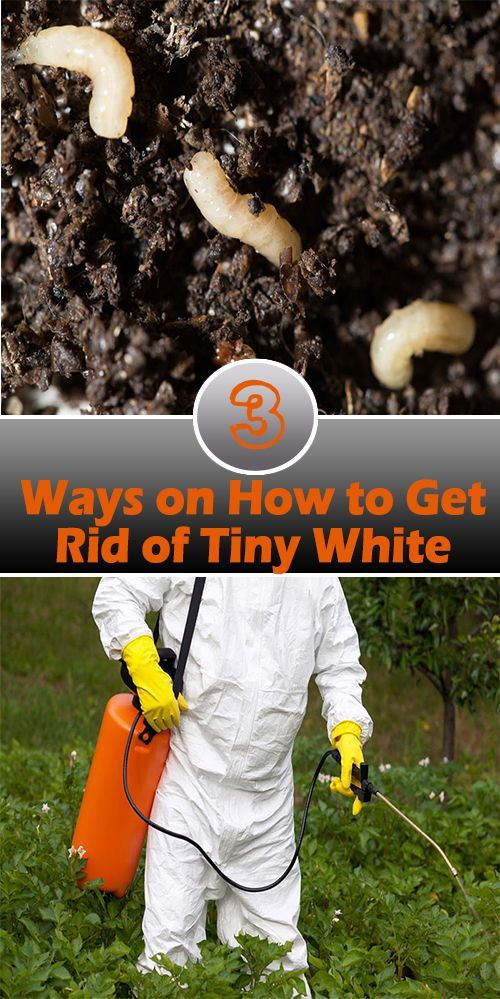 3 Ways On How To Get Rid Of Tiny White Bugs In Soil Garden Pests Garden Pest Control Slugs In Garden